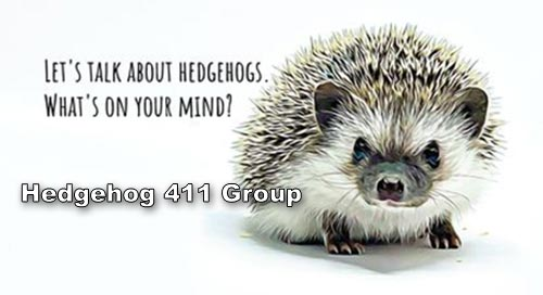 Hedgehog 411 Group